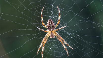 Spinnen verdelgen